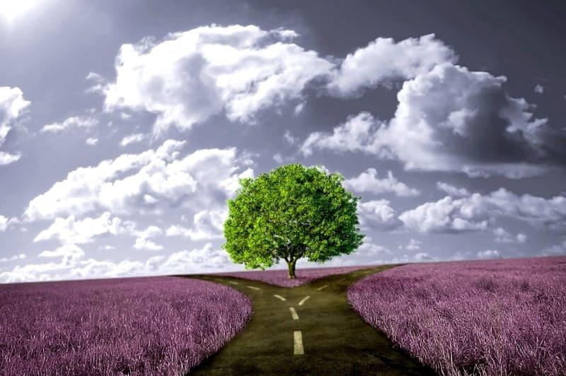 Dos caminos con un arbol verde en el centro simbolizando las distintas rutas que puedes tomar para conseguir tu propósito