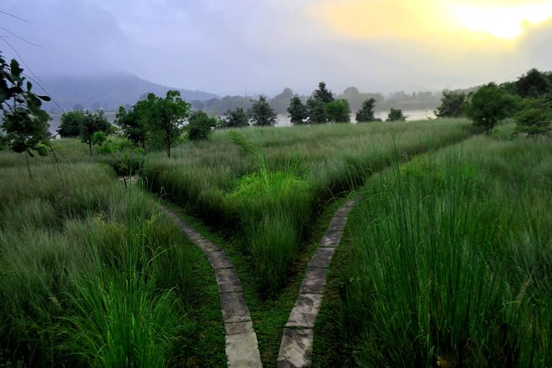 Dos caminos en un prado como símil a la dirección que debes tomar si deseas realizar tu propósito