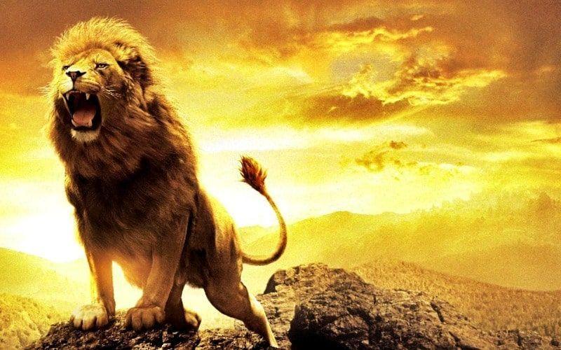 leon rugiendo como simil del valor que hay que reunir para vencer el miedo a fracasar